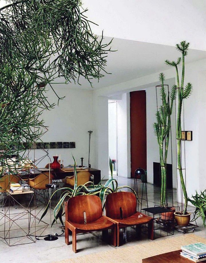 inspiration tall indoor house plants. Home of Maurizio Zucchi from Ideat Magazine June 2011  Indoor plant cages Large is a pencil cactus bright light Plant filled living room My Green Thumb Pinterest Room