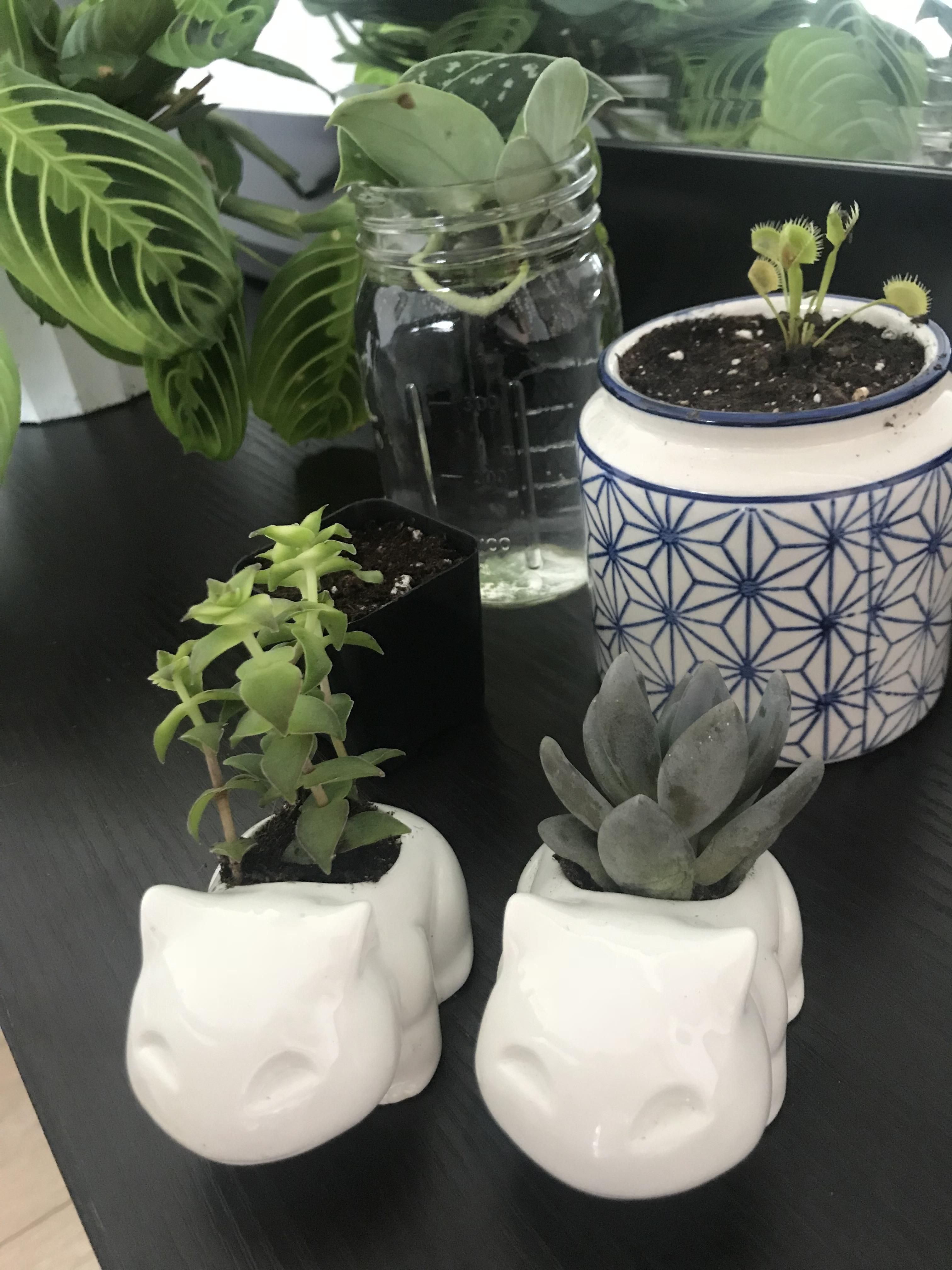 Got These Cute Tiny Planters To Add Some Flair To