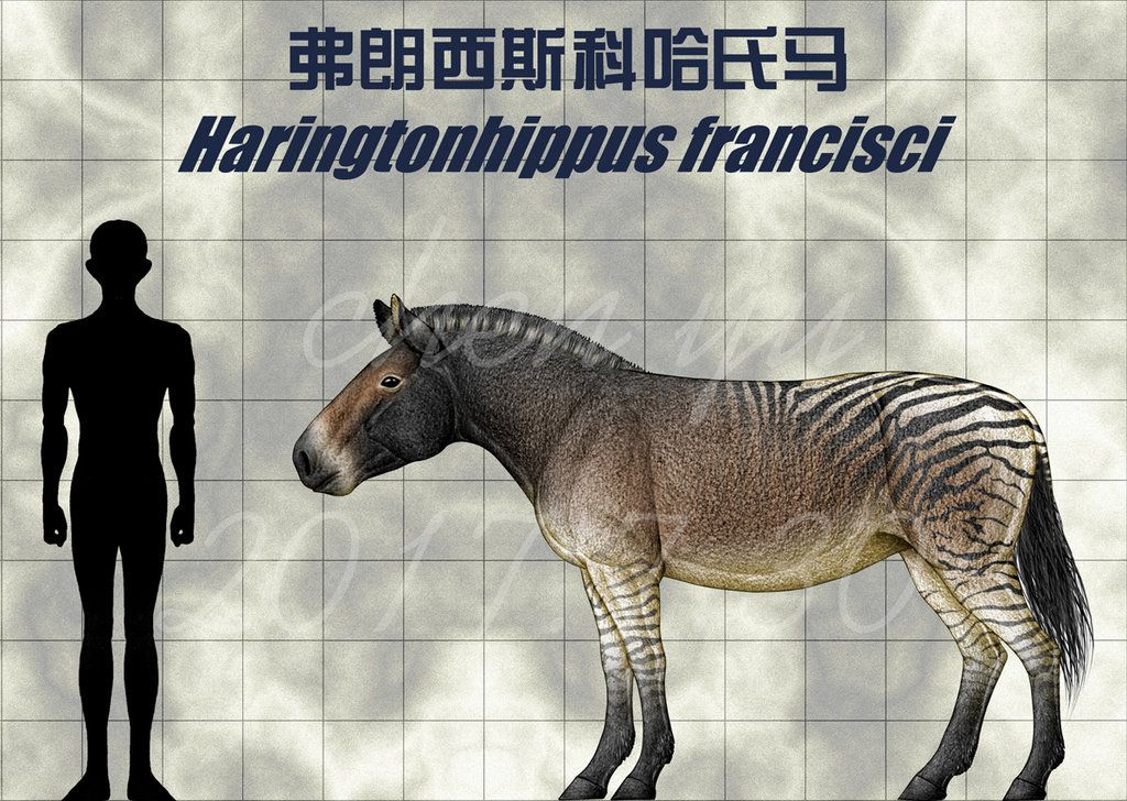 Image result for Harringtonhippus francisi