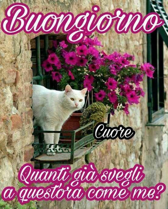 Buongiorno gatto buongiorno buonanotte gatos animais for Buongiorno assonnato
