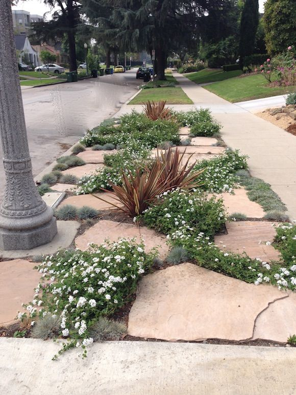 Examples Of How Homeowners Are Replacing Grass Parkways With More Drought  Tolerant Landscaping And Trying To