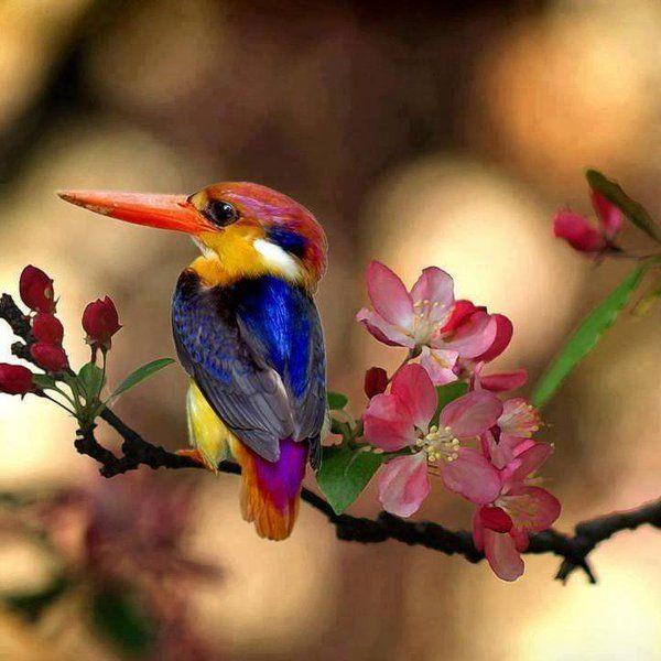 Colors #Bird | Photography by ©Athita Jirapa