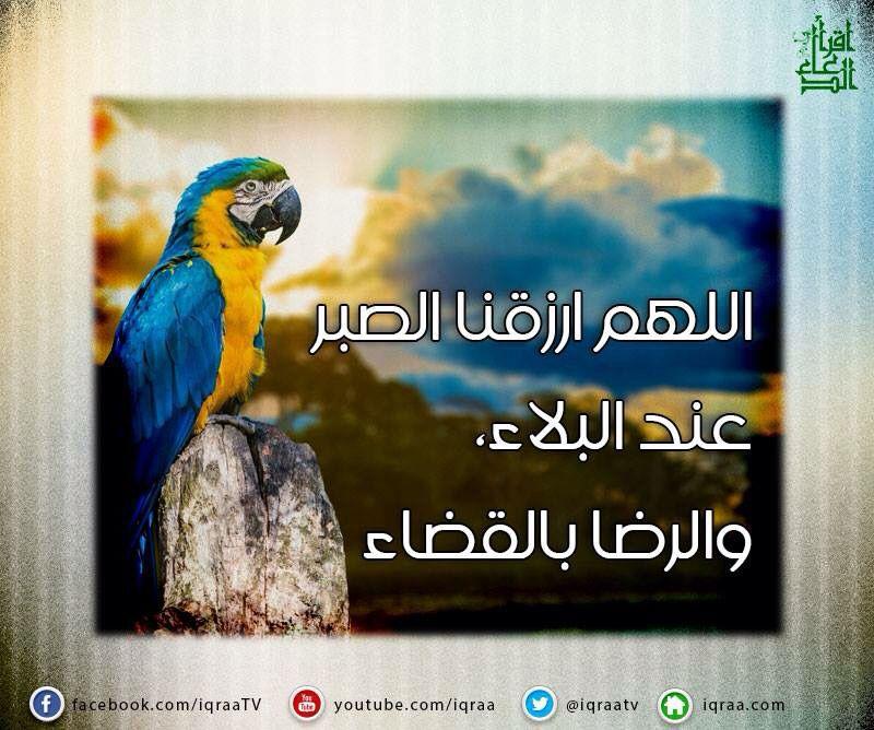 اللهم ارزقنا الصبر Arabic Quotes Islam Quotes