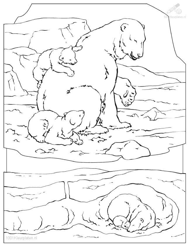 polar bear coloring page - Arctic Colouring Pages