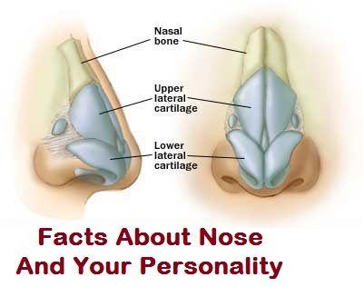What Your Nose Shape Say About Your Personality - Toronto, Calgary, Edmonton, Montreal, Vancouver, Ottawa, Winnipeg, ON