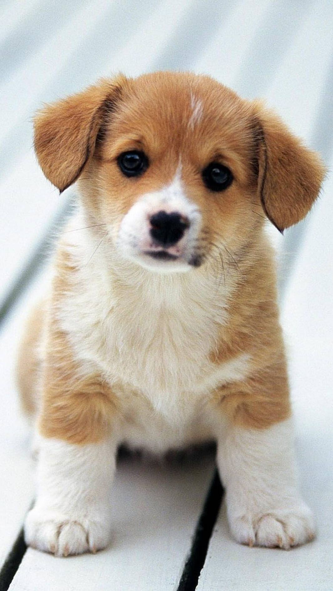Innocent Puppy Hd Wallpapers Download In Link Cute Animal Videos Cute Dogs And Puppies Cute Puppy Wallpaper