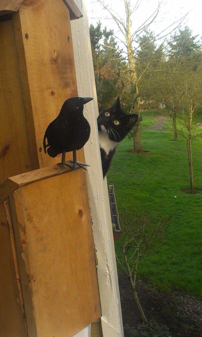 カラスを見る猫