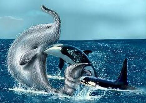 Artists' depiction of two killer whales attacking