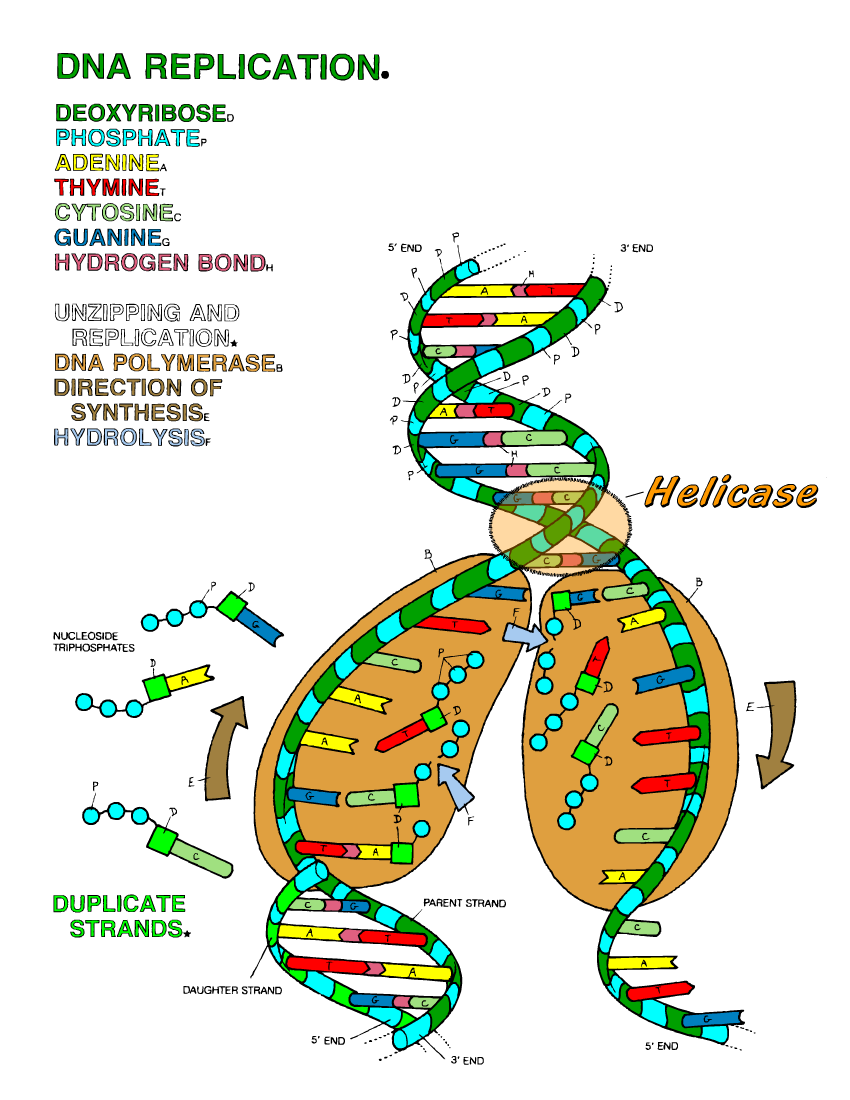 Dna Structure Quotes. QuotesGram Best Dna Structure