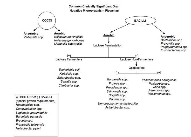 Enterobacteriaceae Flow Chart Erkalnathandedecker