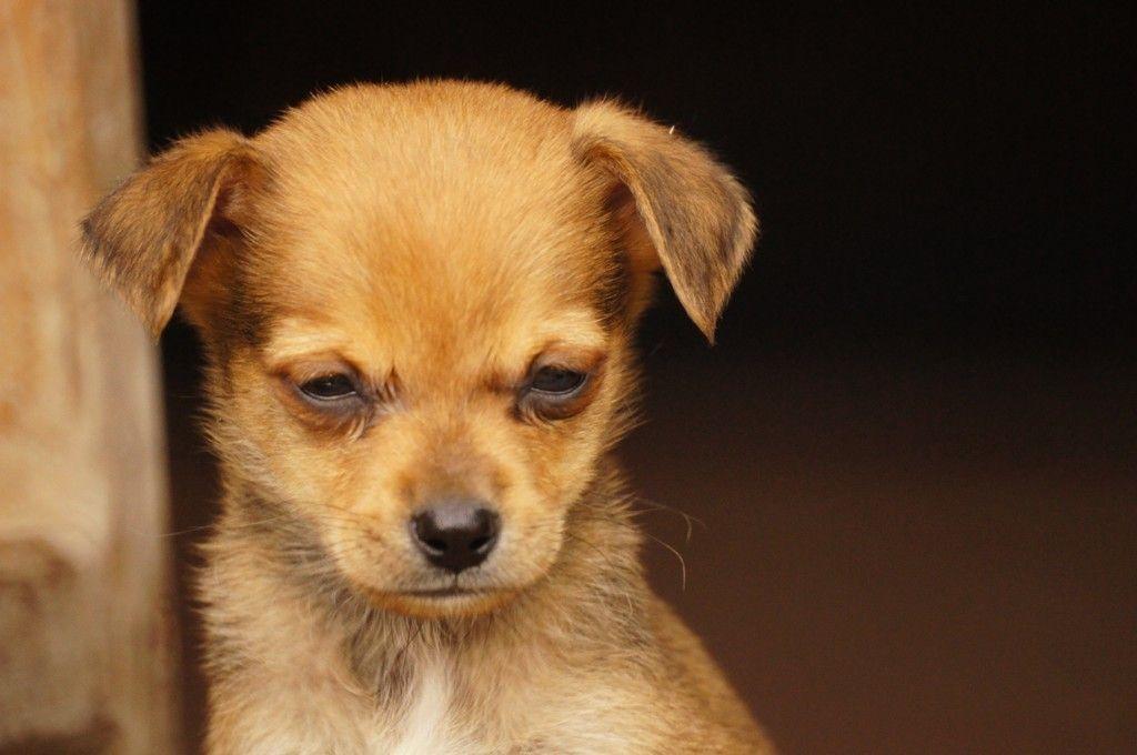 Cute Puppy Head Down Dog Wallpaper Cute Puppies Puppies Dog Wallpaper