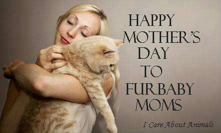 Happy Mother S Day To All Fur Baby Mom Animal Lover Quotes Fur Mom