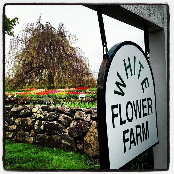 Roadtrip to white flower farm in litchfield ct recent diversions roadtrip to white flower farm in litchfield ct mightylinksfo