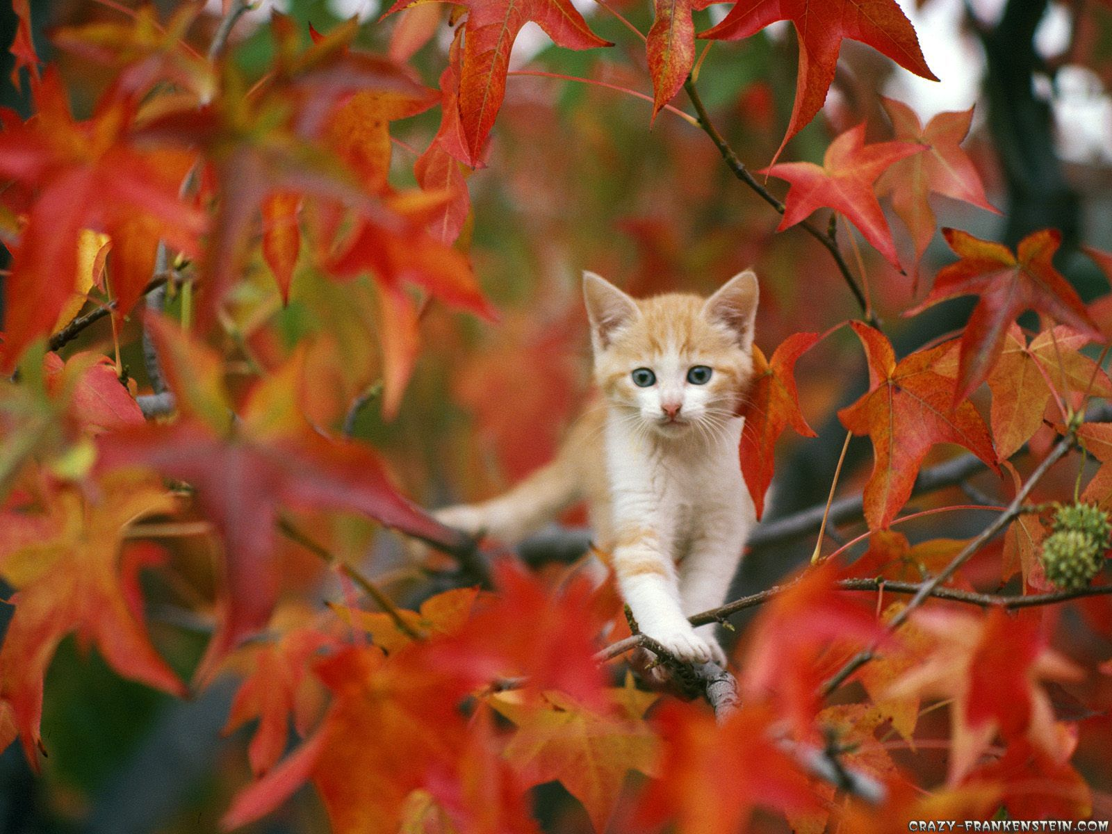 Autumn Kitten Pretty Cats Cats And Kittens Cute Animals