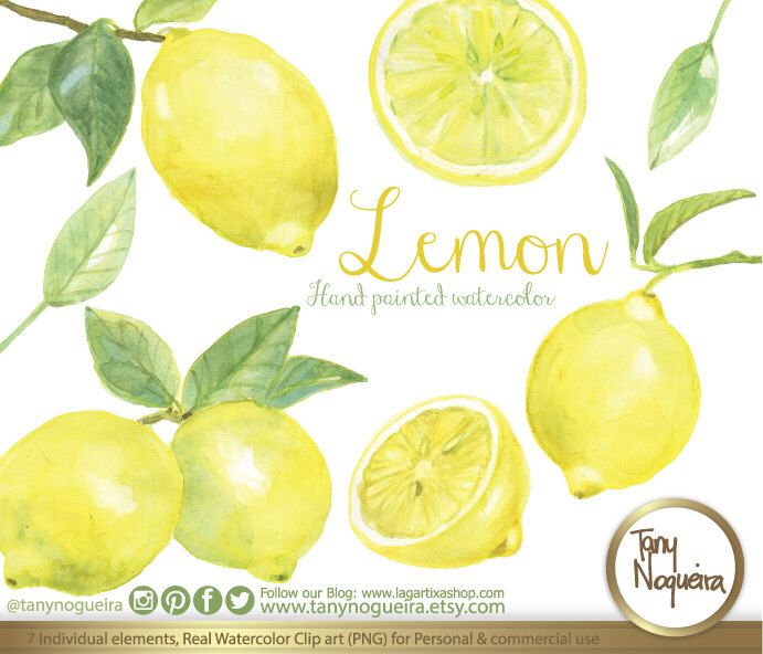Lemon watercolor clipart https://www.etsy.com/mx/listing/232448728/acuarela-limas-limones-amarillos-frutas #LEMONADE #lemons #pngforprint #DIY #blogdesign #christmasgift