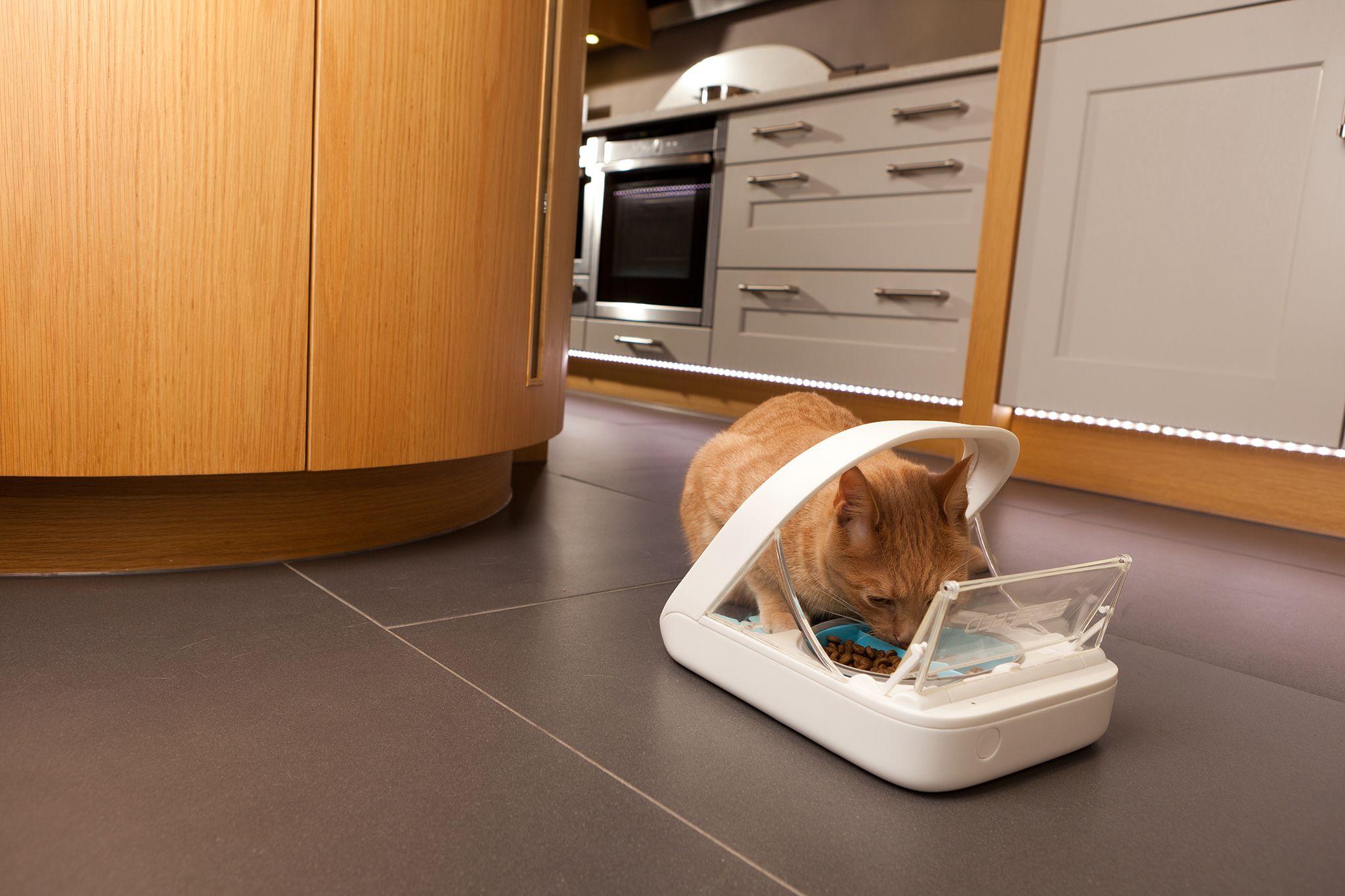 Sureflap Microchip Cat Flap Amazon.co.uk Pet Supplies