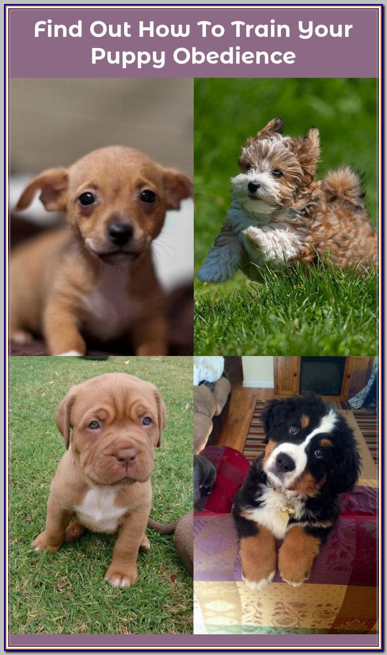 Finding Your Best Options For Puppy Obedience Training Puppy
