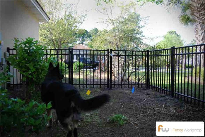 Wrought Iron Dog Fencing Someday We Ll Have A Fenced In Yard