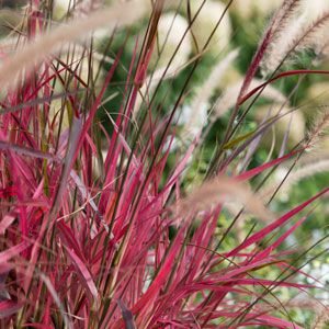 Choose the best ornamental grass for your garden garden club choose the best ornamental grass for your garden workwithnaturefo