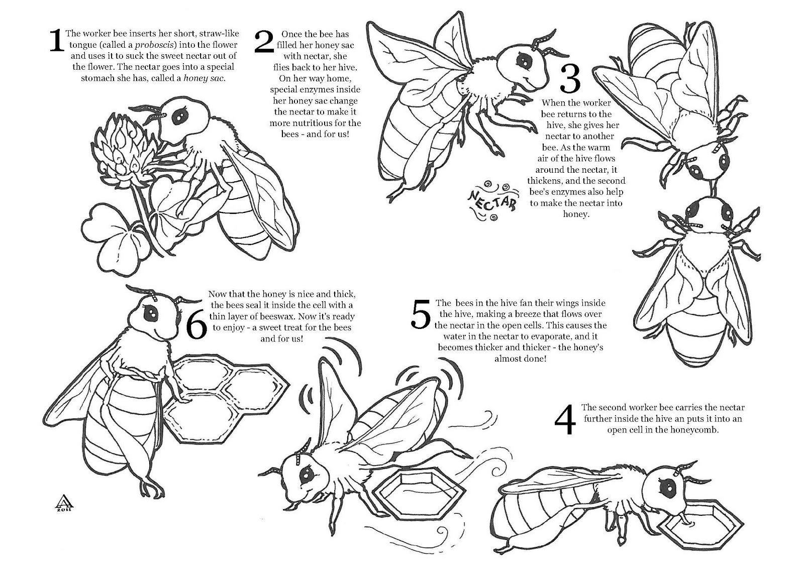 Bee Pollination Worksheets   Printable Worksheets and Activities for  Teachers [ 1131 x 1600 Pixel ]