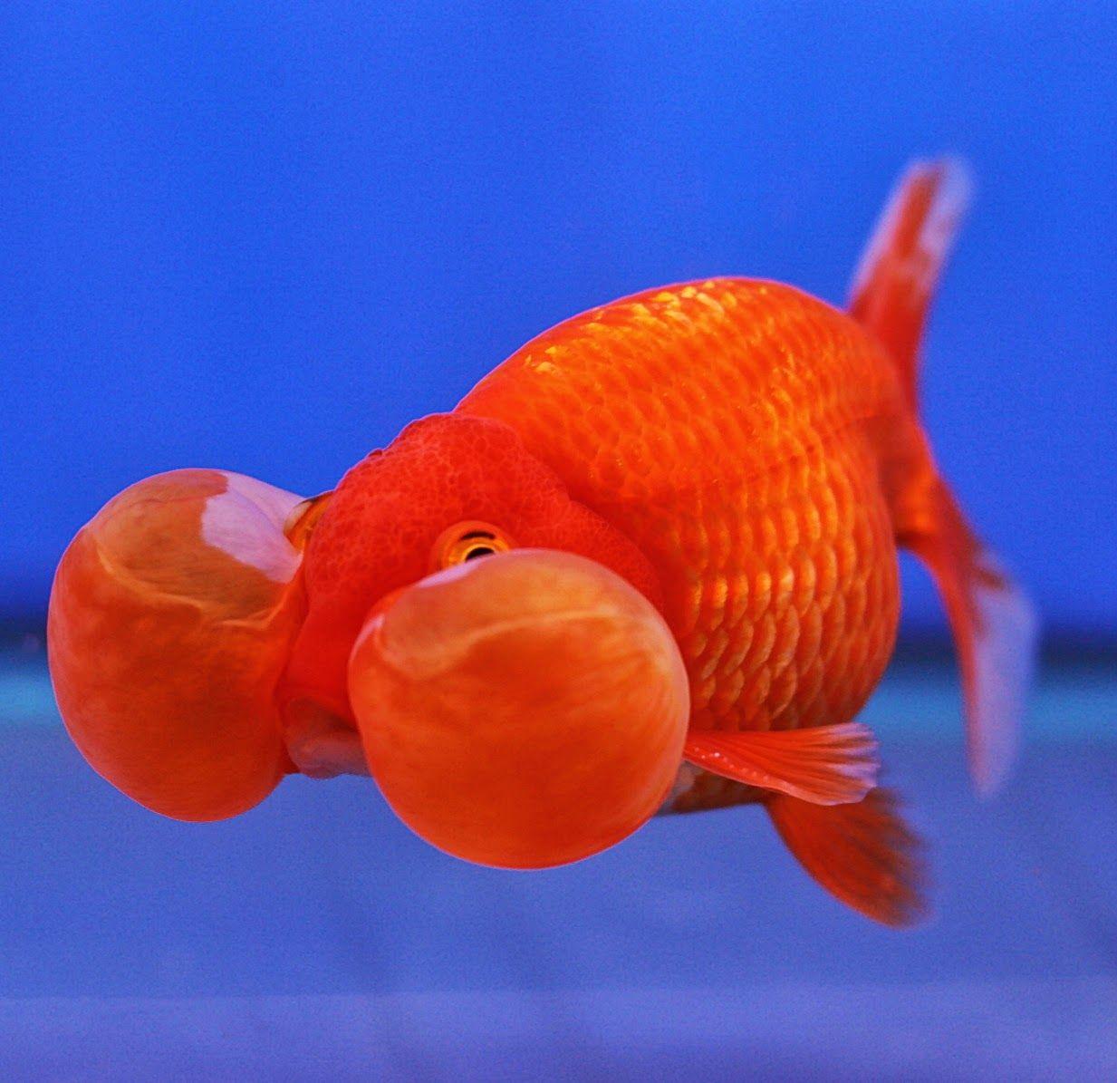 10 Best Fish For A 10 Gallon Tank Setup Tropical Fish Tanks