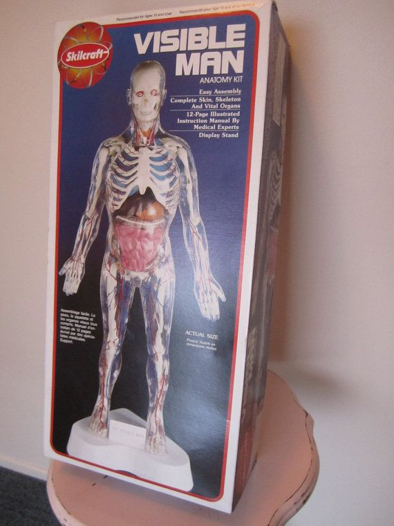 Complete Unused 1994 Visible Man Anatomy Kit By Skilcraft Paint