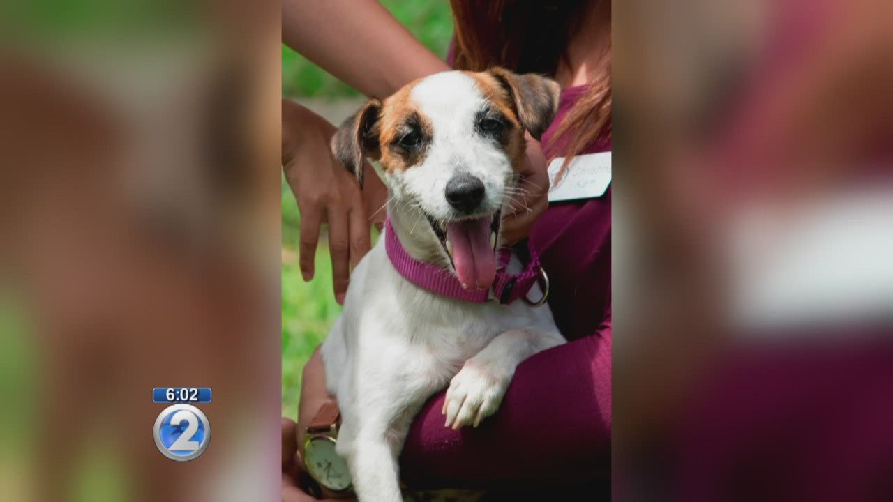 The Hawaiian Humane Society says it's disappointed by a