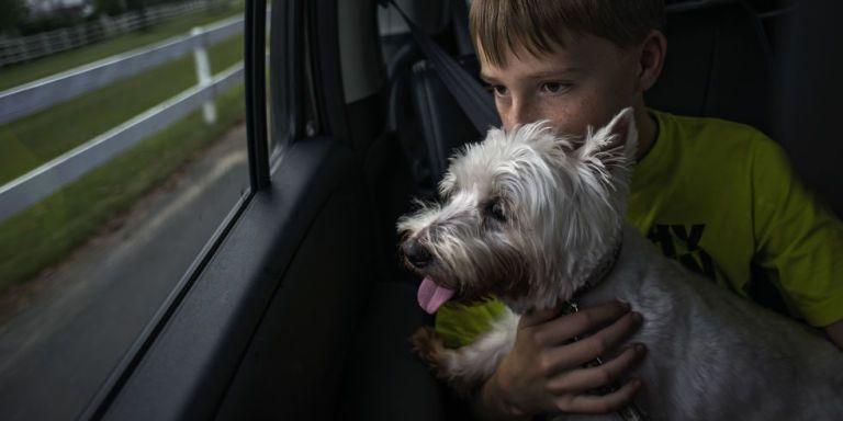 Pin On Craigslist Pets