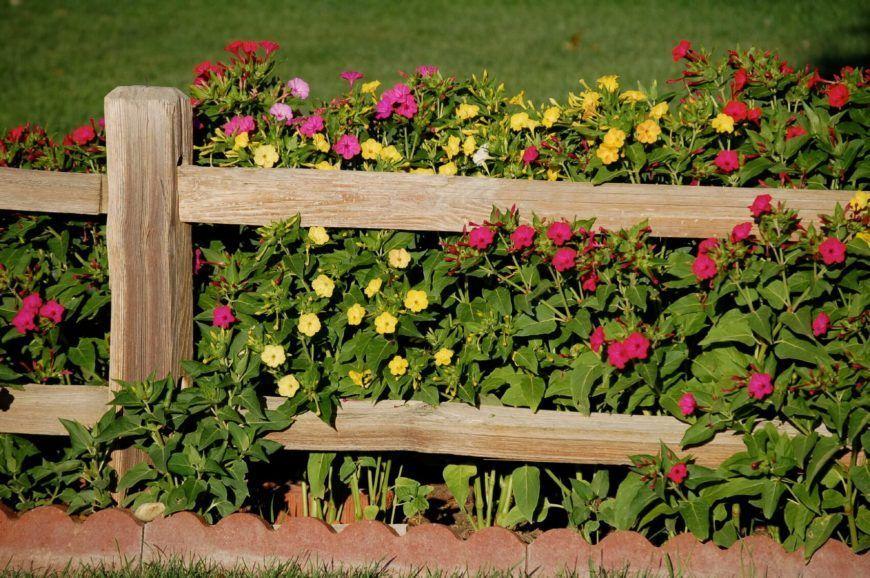 Dies Ist Ein Wunderschones Beispiel Fur Einen Grob Behauenen Eingezaunten Zaun Vor Einem Pfla In 2020 Backyard Fences Fence Landscaping Backyard Ideas For Small Yards
