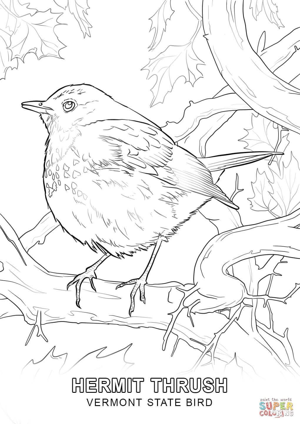 Click The Vermont State Bird Coloring Pages To View Printable