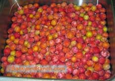 Home canning sand plum jelly - great step by step