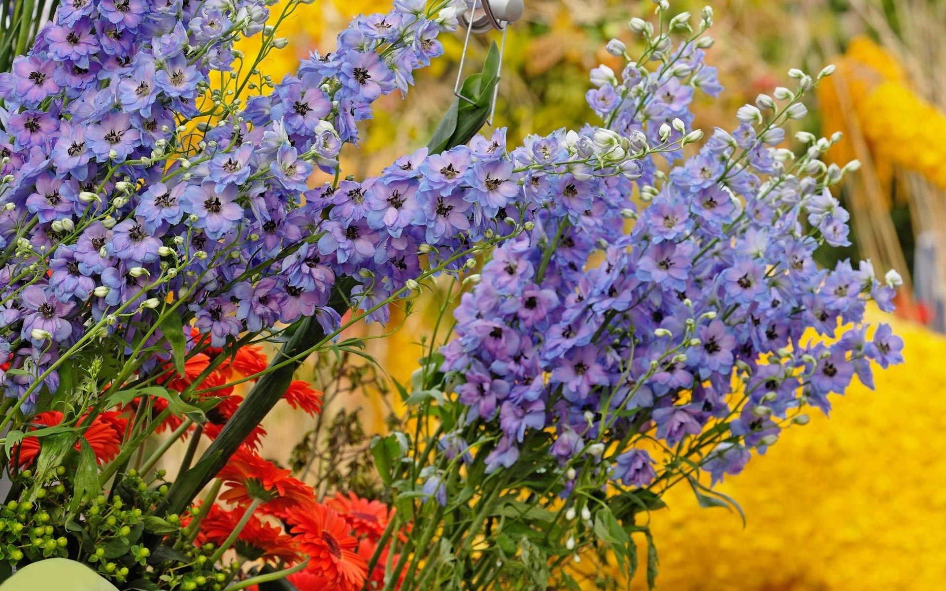 Quality Cool colorful flowers image, 578 kB - Woodward WilKinson