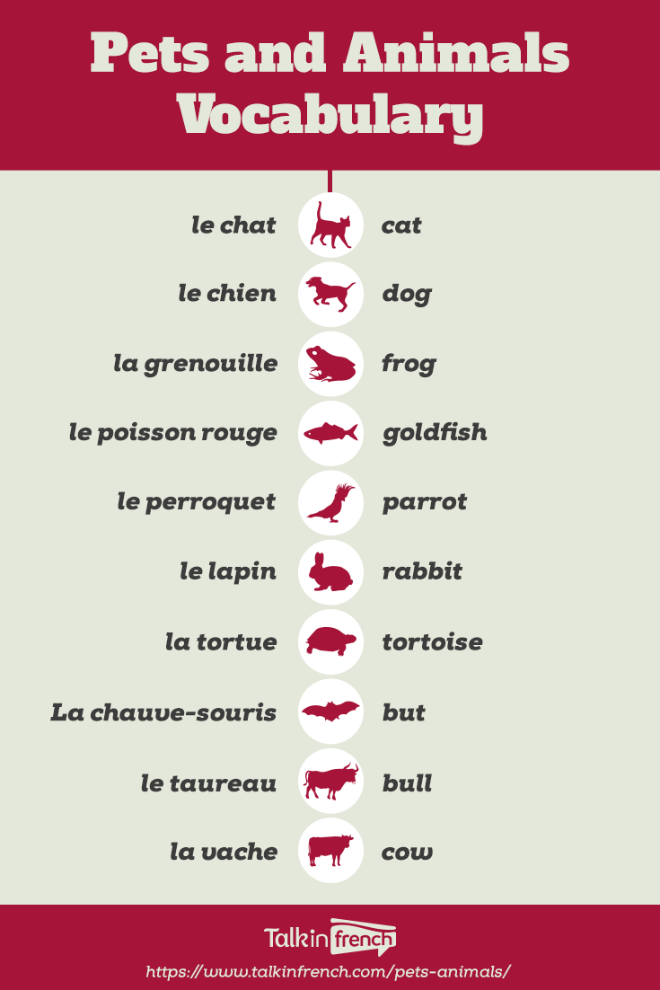 French Vocab Pets And Animals Talk In French Basic French Words French Language Lessons French Basics