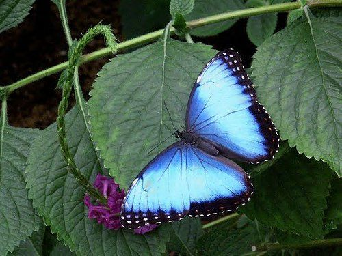exotic butterfly photos around the world | Butterfly Magic at the Tucson Botanical Gardens