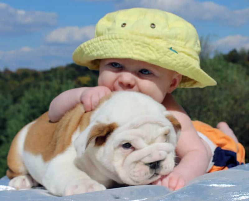 Baby With White And Brown Bulldog English Bulldog Puppies French Bulldog Puppies Bulldog