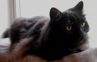 Cozy Cat Cushion Craft