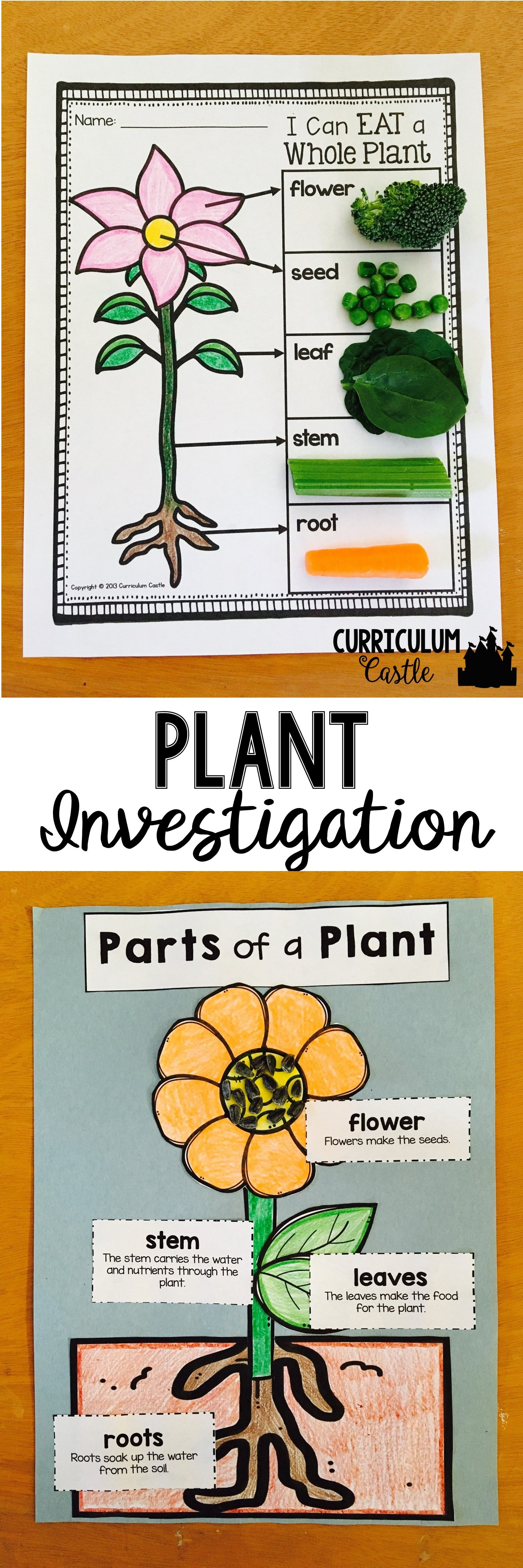 Plant Life Cycle And Investigation Parts Of A Plant Craft