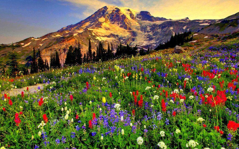 De Flores En La Montana: De Flores En La Montana
