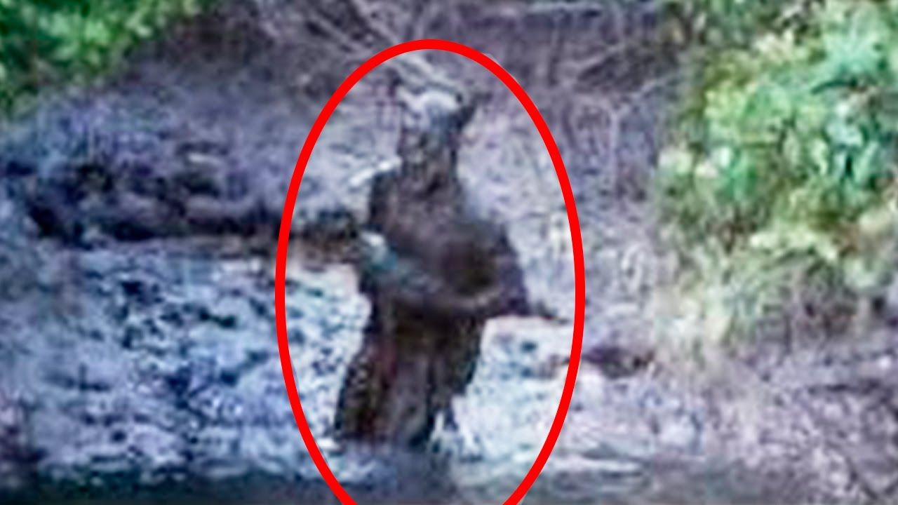 5 Strange Creatures Caught on Camera & Spotted In Real Life! | Scary ghost pictures, Weird creatures, Paranormal photos