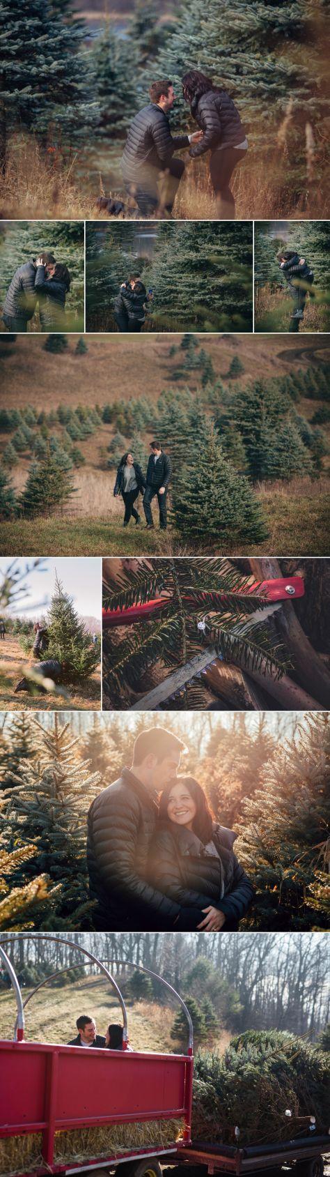 Luke Karli Michigan Winter Tree Farm Proposal Proposal Ideas