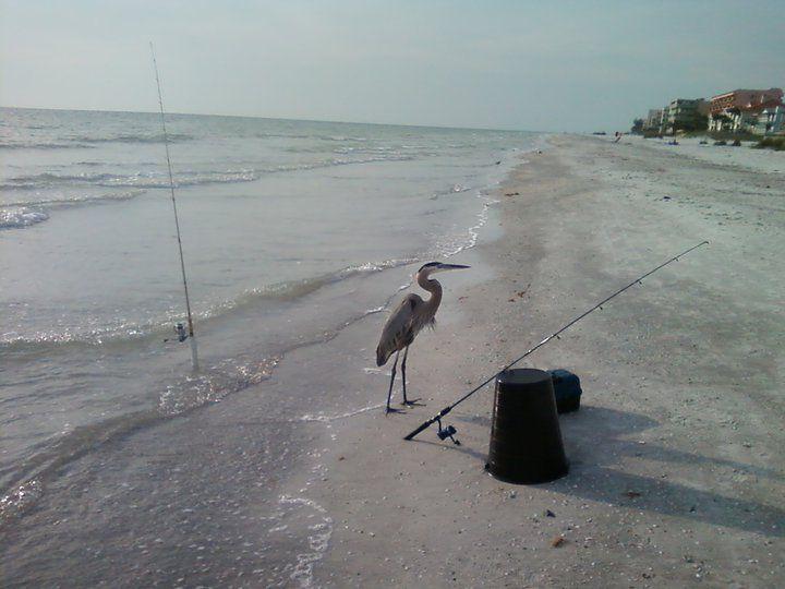 Look Who S Fishing Indian Rocks Beach Fl Indian