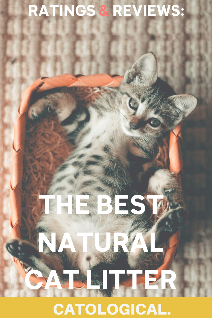 9 Best Natural Cat Litter Alternatives That Are Healthy And Safe Reviews In 2020 Natural Cat Litter Best Cat Litter Cat Litter