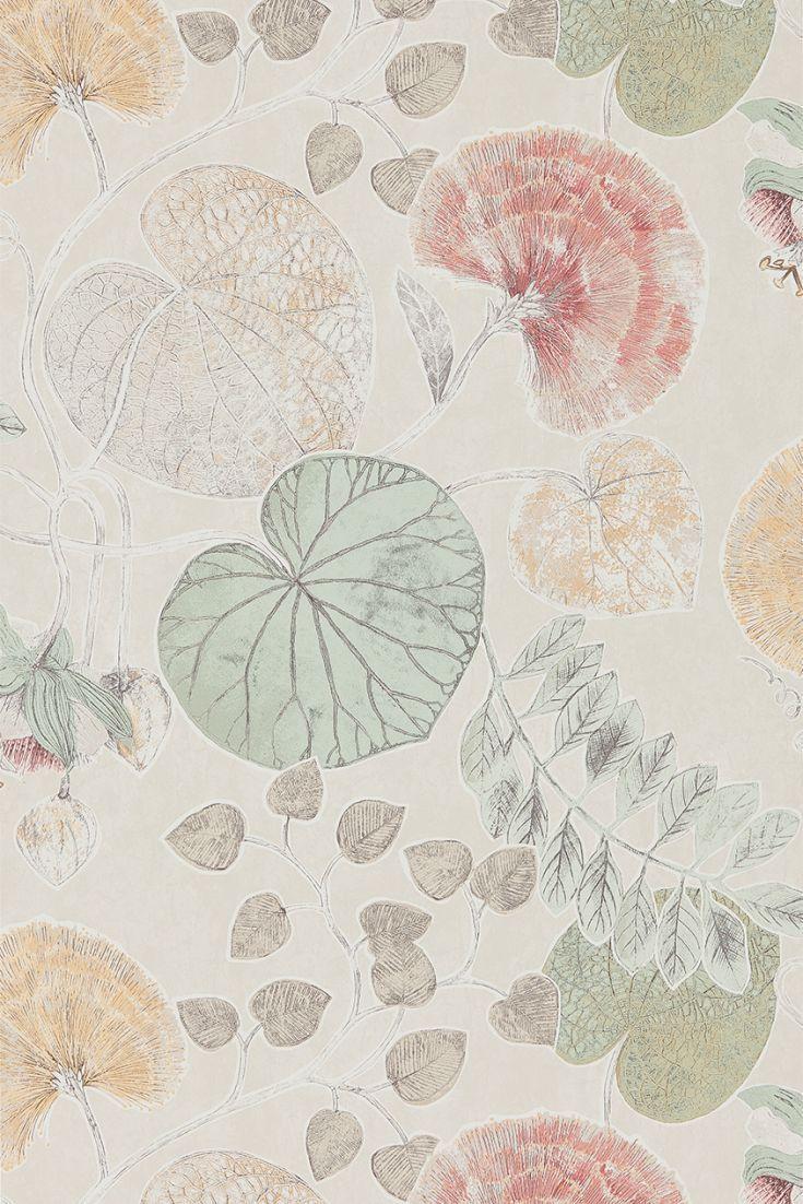 Dardanella Wallpaper 111260 Pinterest