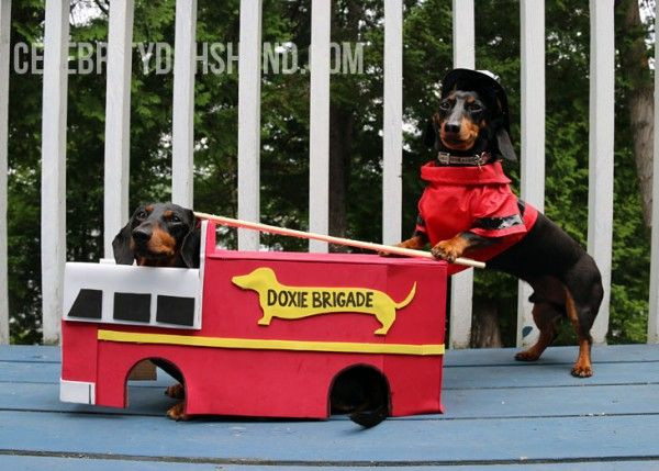 Firefighters Ice Cream Cute Butts Dachshund Puppy Funny