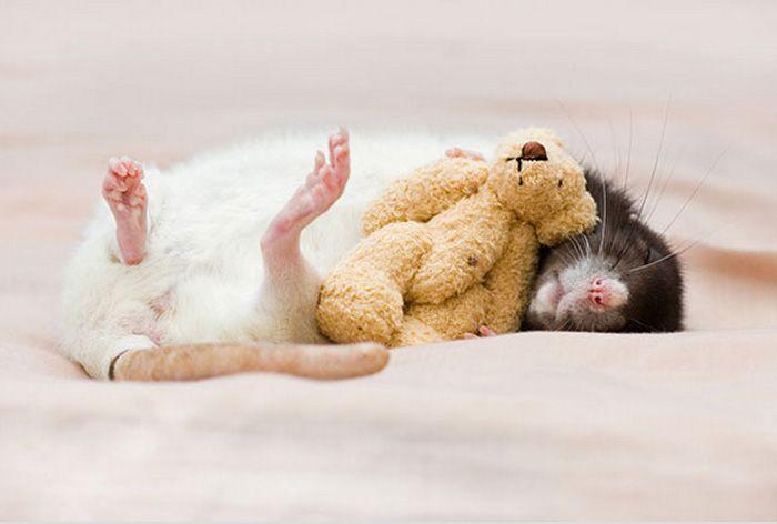 Fotógrafas provam que ratos também podem ser fofos