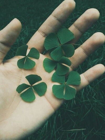 Imagem de green, clover, and nature