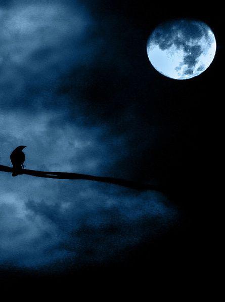 ^Black Bird