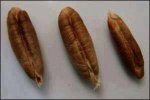 نقره لتكبير أو تصغير الصورة ونقرتين لعرض الصورة في صفحة مستقلة بحجمها الطبيعي Health Food Food Fruit