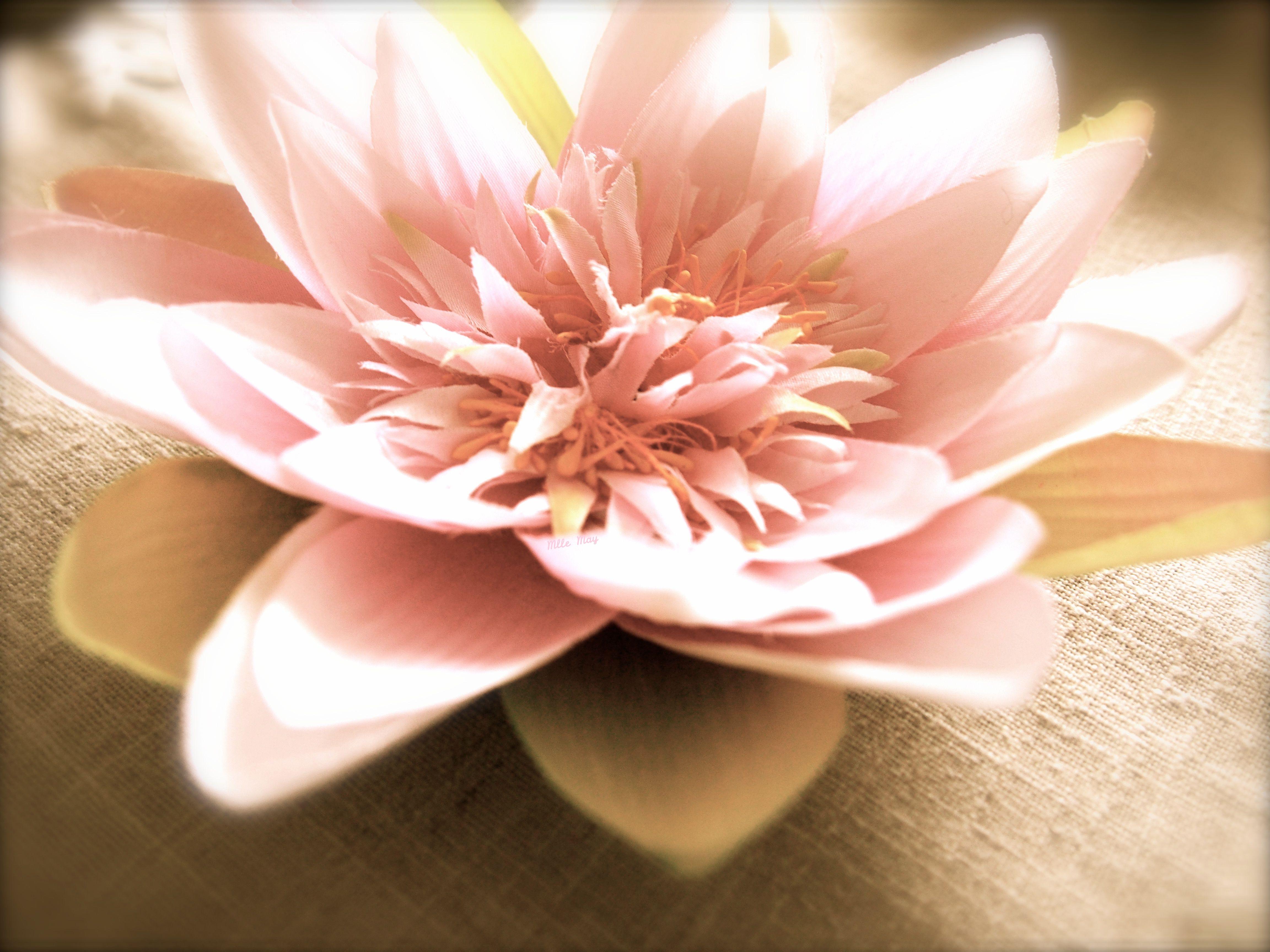 Fleur De Lotus Home Sweet Home Pinterest Sweet Home Sweet