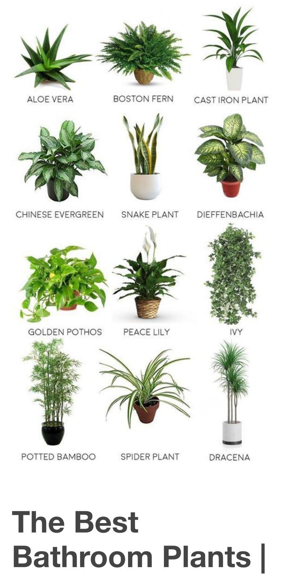 Pin By Leticia Baca Razo On Plant Shop Plants Best Bathroom Plants Plant Decor Indoor